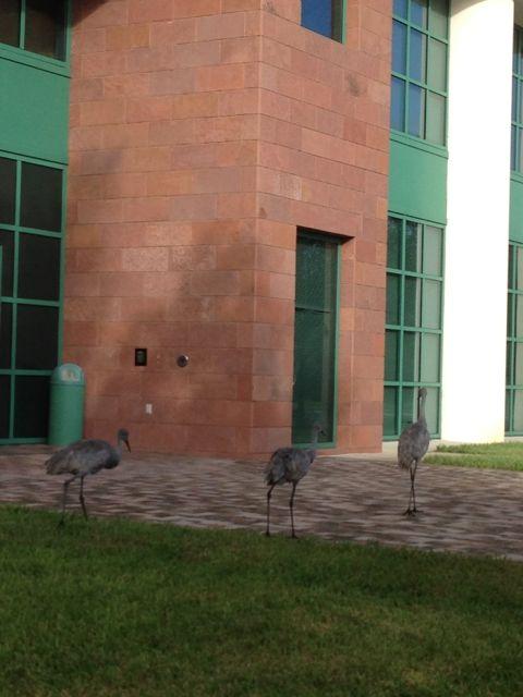 office birds
