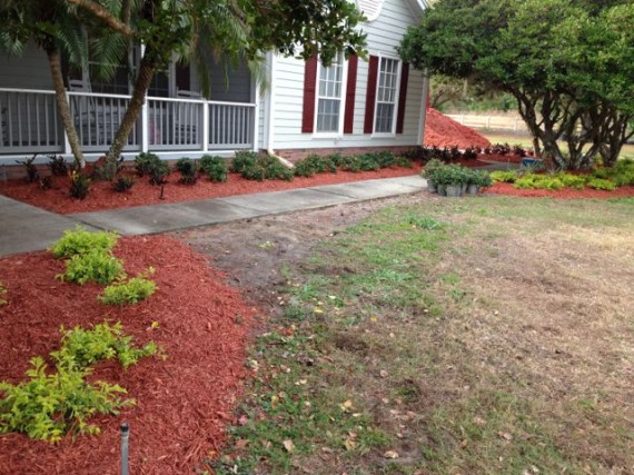Central Florida landscape project