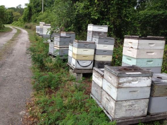 Orange Grove bee hives