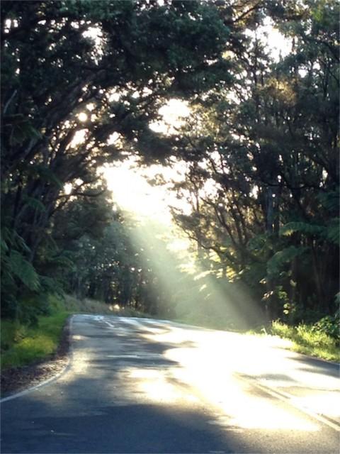 Volcanoes National Park road just after sunrise