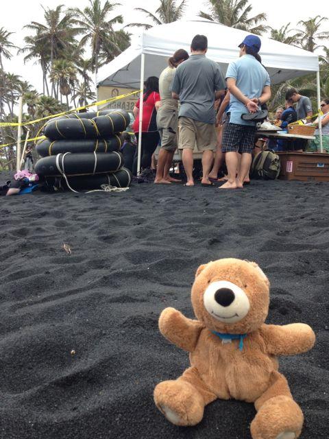 Teddy Bear on Hawaiian black sand beach
