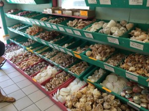 Boxes and boxes of sea shells for sale on Sanibel Island