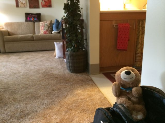 Teddy Bear in Assisted Living Apartment