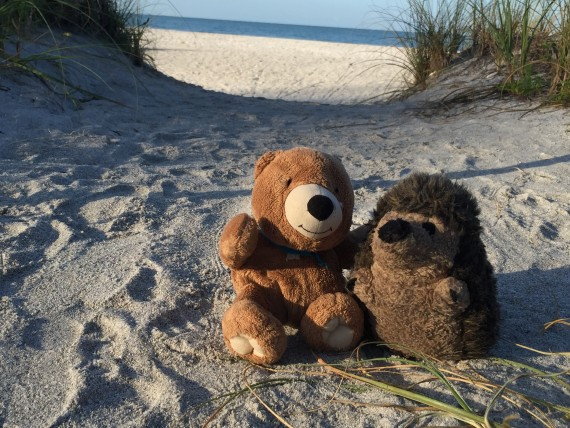 Stuffed Teddy Bear and Hedge Hog at Beach