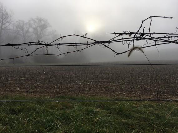 Farmer's fence