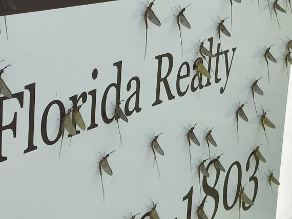 Florida insects