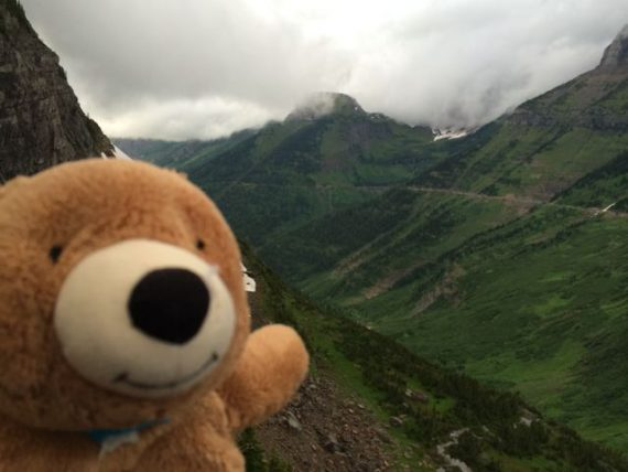 Jack the Bear in Glacier