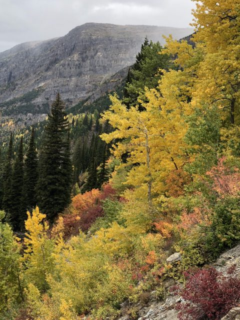 Glacier fall foliage