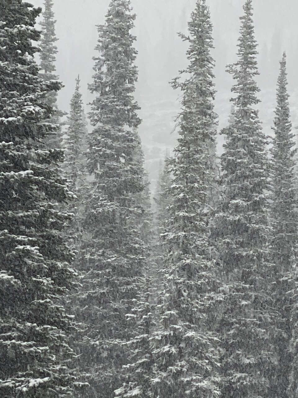 Forest and snow storm