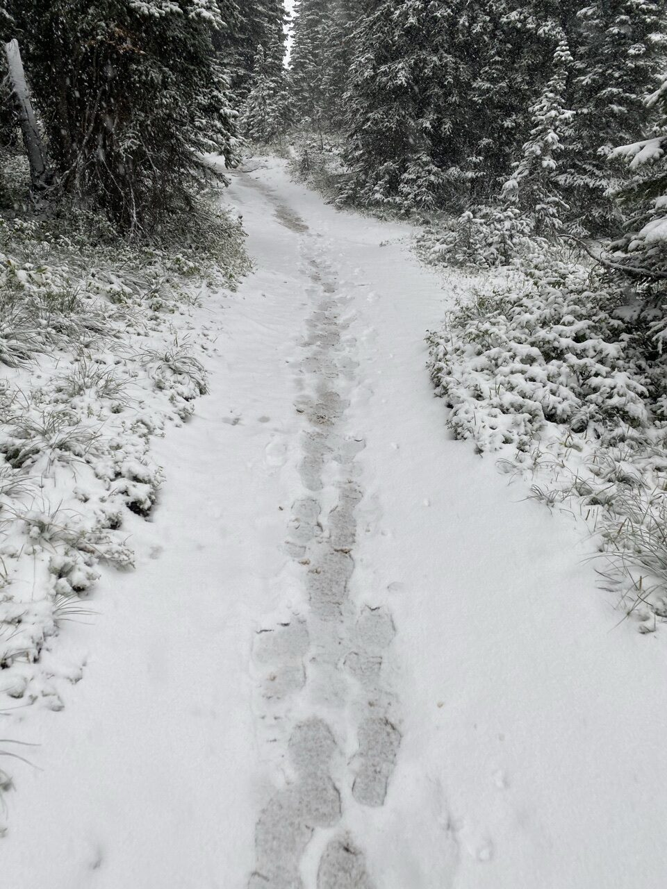 snow-covered hiking trail with footprints