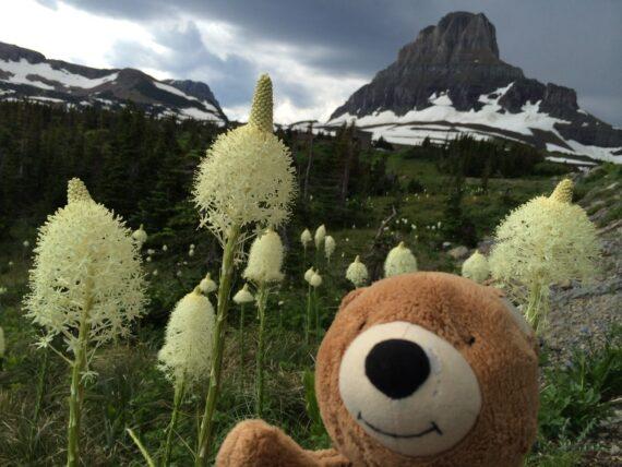 Teddy bear in mountains