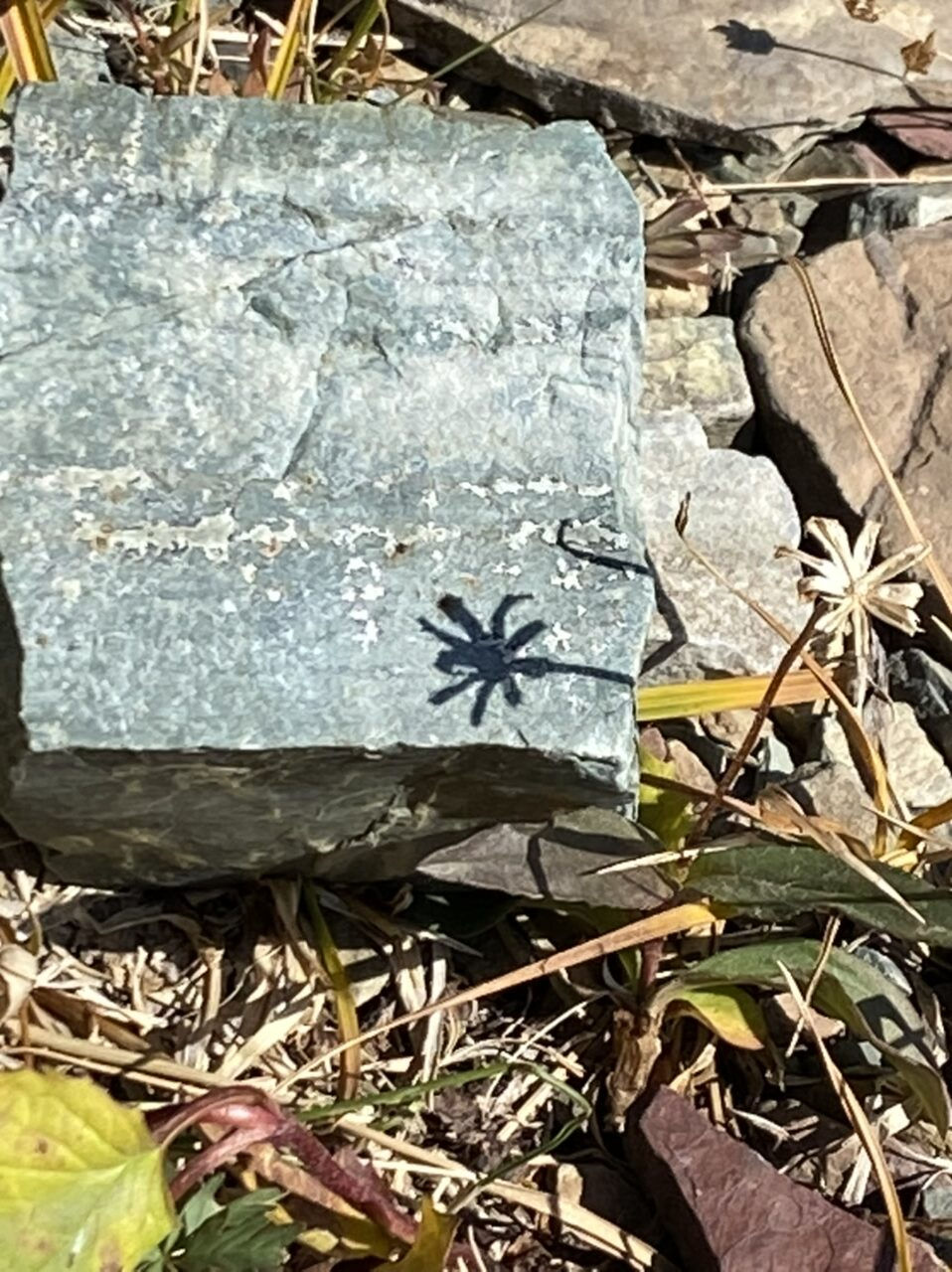Small flower's shadow on a stone