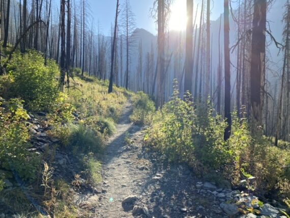 hiking trail through removing forest fire
