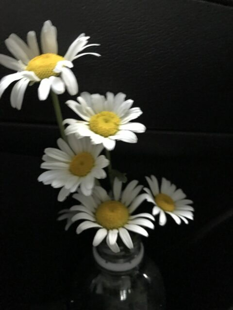 daisies in a bottle